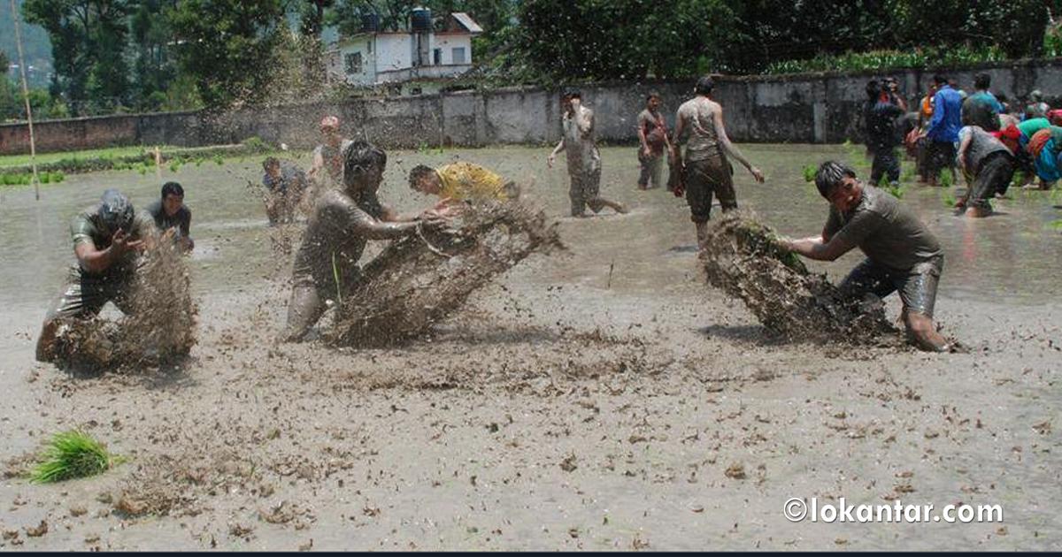 रोपाइँ खेतमा 'राइस रोप्ने' बच्चादेखि 'गाँस फलाउने' किसानसम्म (फोटो फिचर)