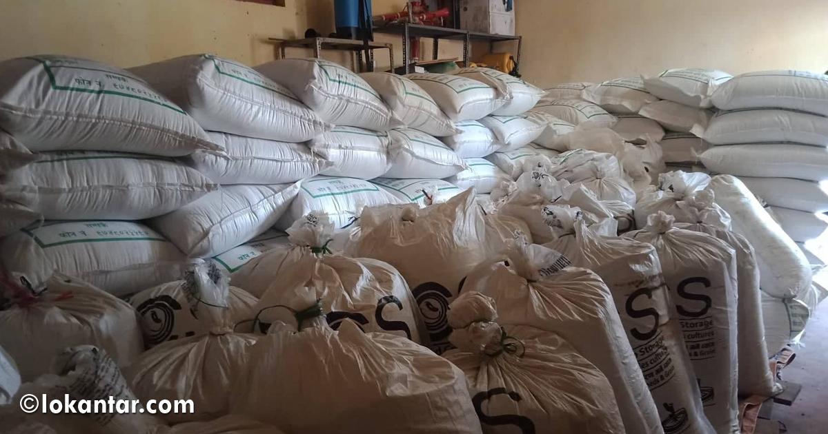 सुर्खेतमा १० मेट्रिक टन गहुँको बीउ गोदाममै थन्कियो, बिक्री नभएपछि खेर जाने खतरा