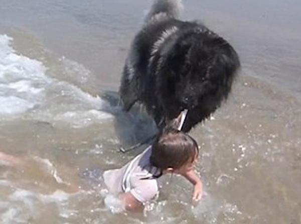 समुद्रको लहरले लडायो बच्चीलाई, बचायो कुकुरले (भिडियो)