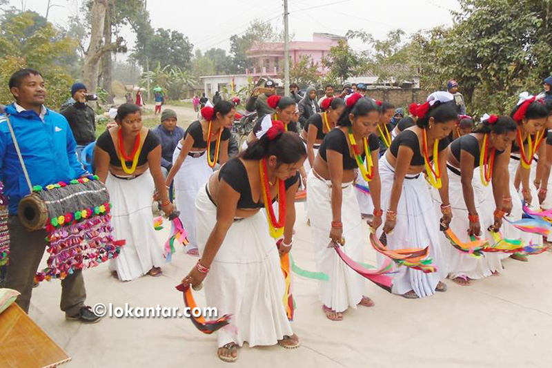 थारु बस्तीमा सखिया नाचको पूर्वअभ्यास, युवामा घट्दो मोहले अस्तित्व संकटमा पर्ने चिन्ता
