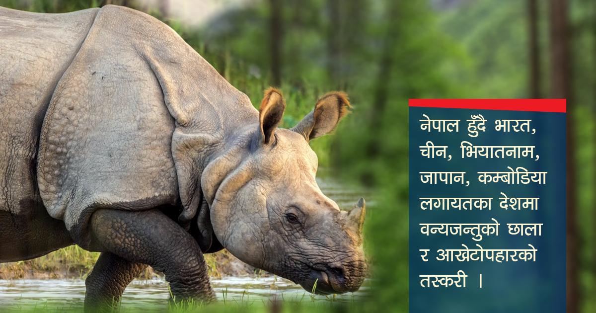 वन्यजन्तुका अंग तस्करी गर्ने 'ट्रान्जिट' बन्दै नेपाल, शिकार भन्दा सप्लाइ बढी
