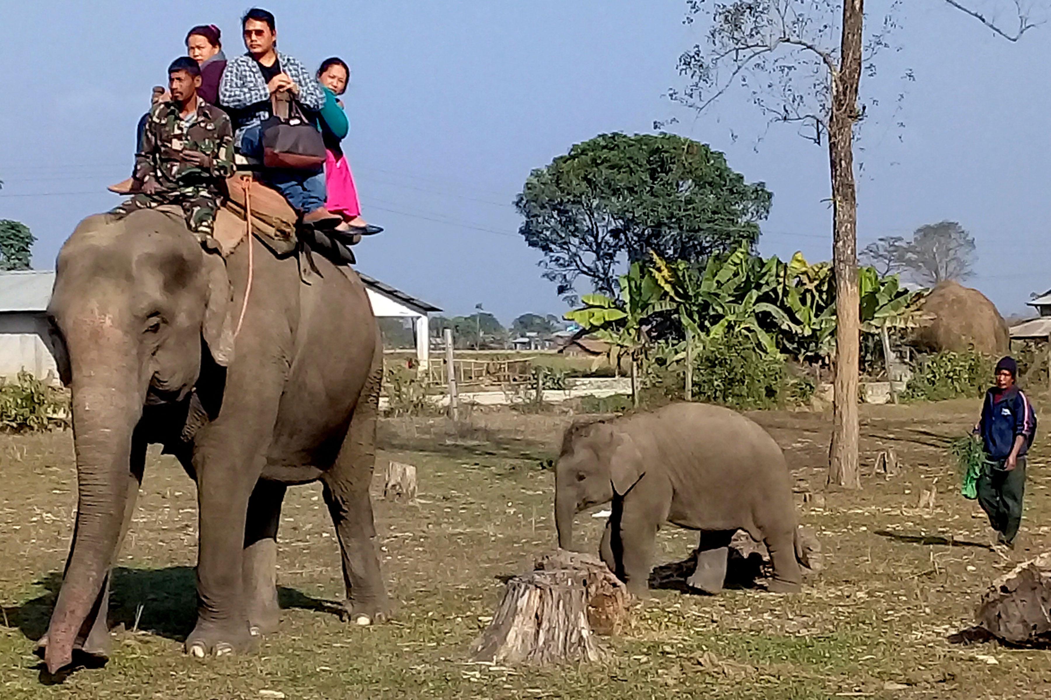 मातृ-प्रेम : आमासँगै हिड्छिन चम्पाकी छोरी सीता !