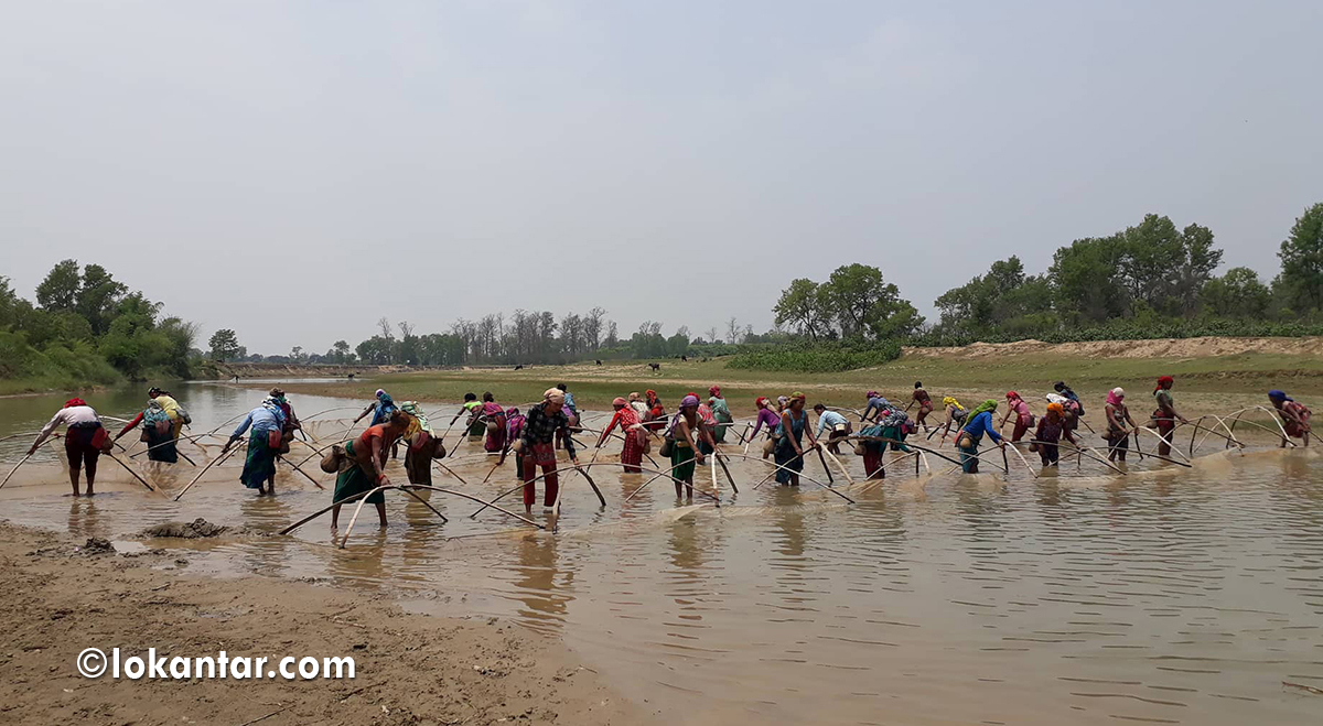 गर्मी छल्ने गज्जबको काइदा : खोलामा माछा मार्दै, बैजल्ला खेल्दै थारु समुदाय