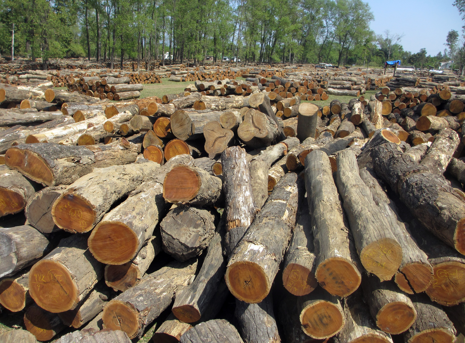 चुनावको मौका छोपी तस्करहरु सल्बलाए, वन विनाश तीव्र