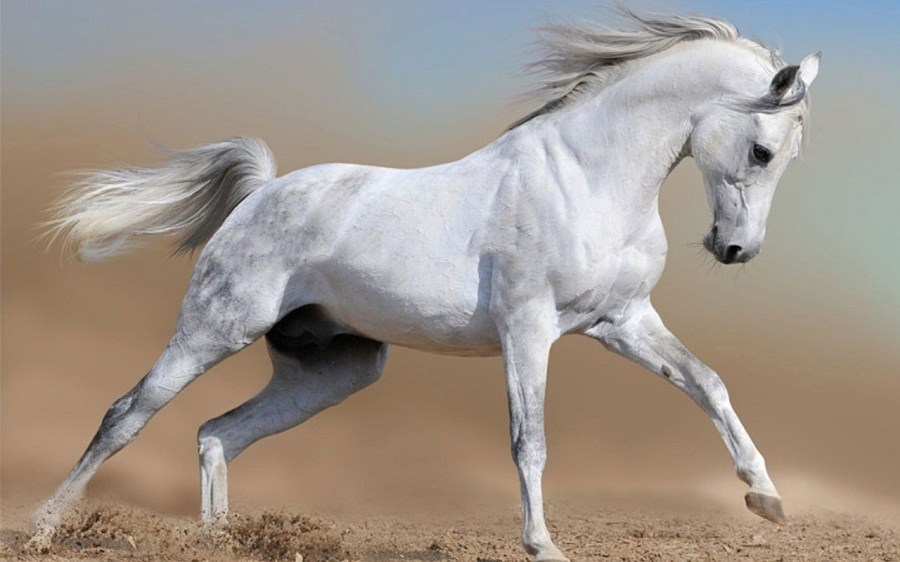 बडादशैंको मध्यरातमा सेतो घोडेजात्रा, दरबार क्षेत्रको पशुपतिनाथलाई घोडा नाच देखाउने चलन