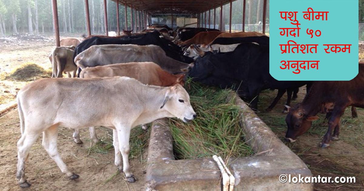 दूध उत्पादक किसानका समस्यै–समस्या