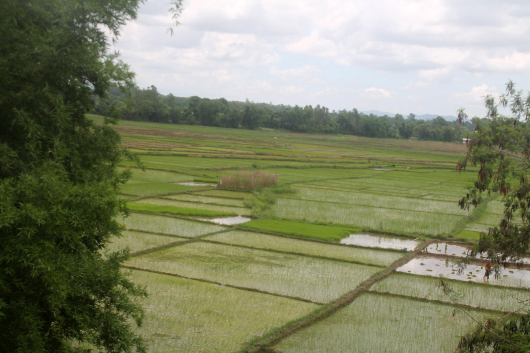 बाढी र हावाहुरीले कृषि क्षेत्र तहसनहस, मन्त्रालयमा आउँदै क्षतिको आँकडा