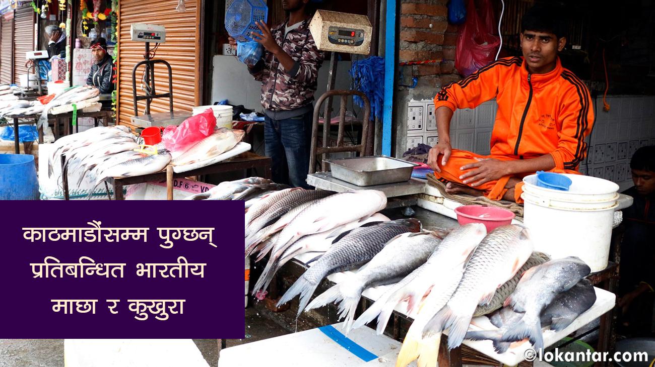 पशु क्वारेन्टाइनको बेहाल : भारतीय व्यापारीले ल्याउने प्रयोगशालाको पत्रलाई (अन्ध)विश्वास !