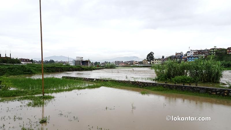 बाढीले २ नम्बर प्रदेशको कृषि र पशुपन्छी क्षेत्रमा ३ अर्ब बढीको क्षति
