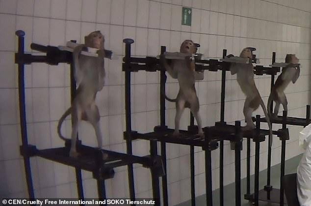 जर्मनीको एक प्रयोगशालामा जनावरहरूमाथि चरम दुर्व्यवहार (भिडियो)
