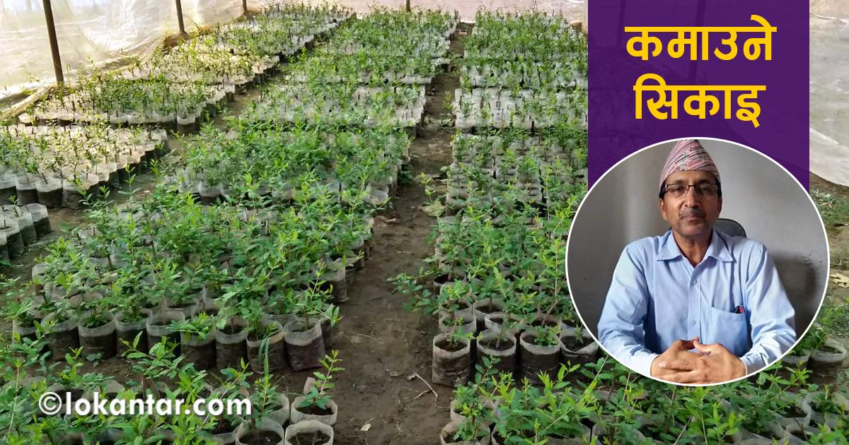 विद्यालयमा खेतीपाती गर्ने 'हेडसर' : एकातिर व्यावसायिक शिक्षा, अर्काेतिर कमाइ