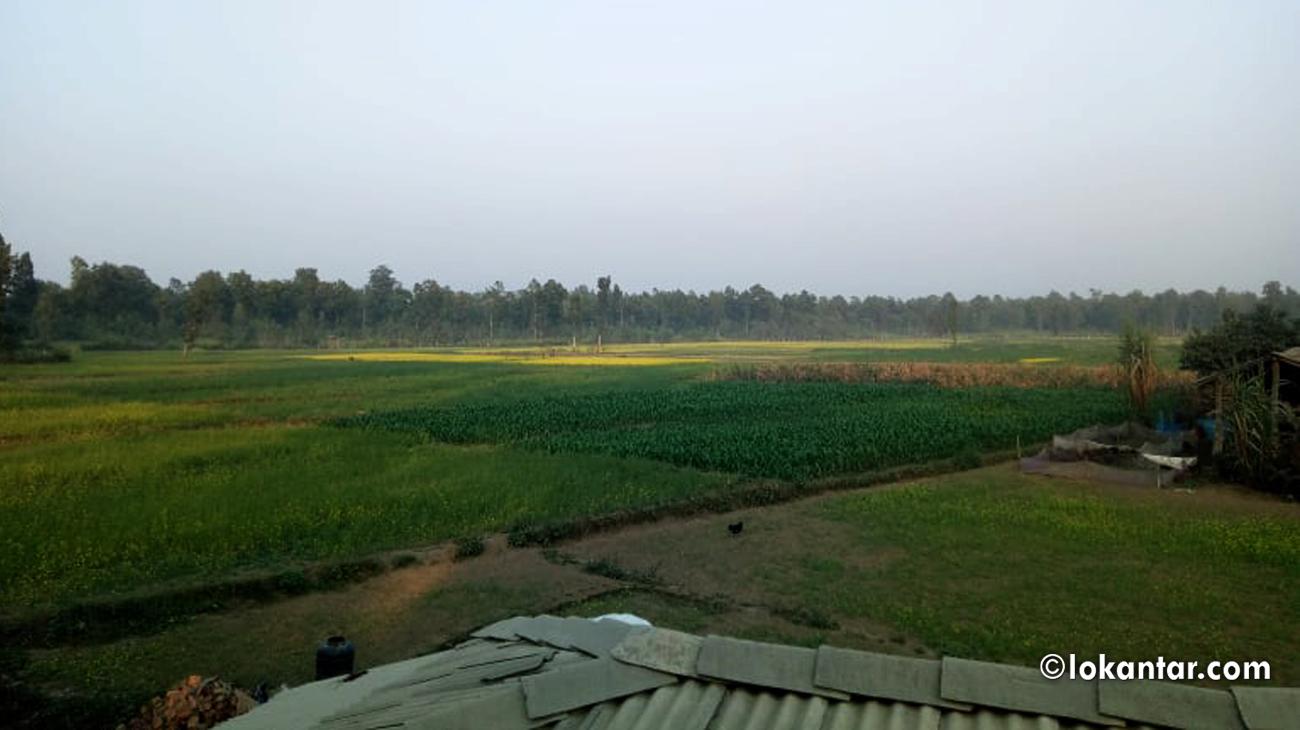 विमानस्थल बन्ने क्षेत्रमा रहेको टाँगिया बस्ती