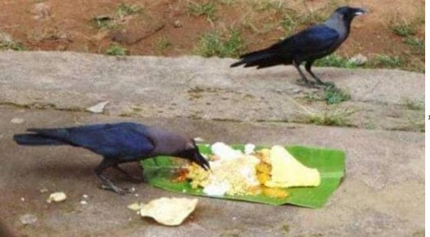 सोह्रश्राद्धमा कस्तो छ पक्षीहरूको महत्त्व ?