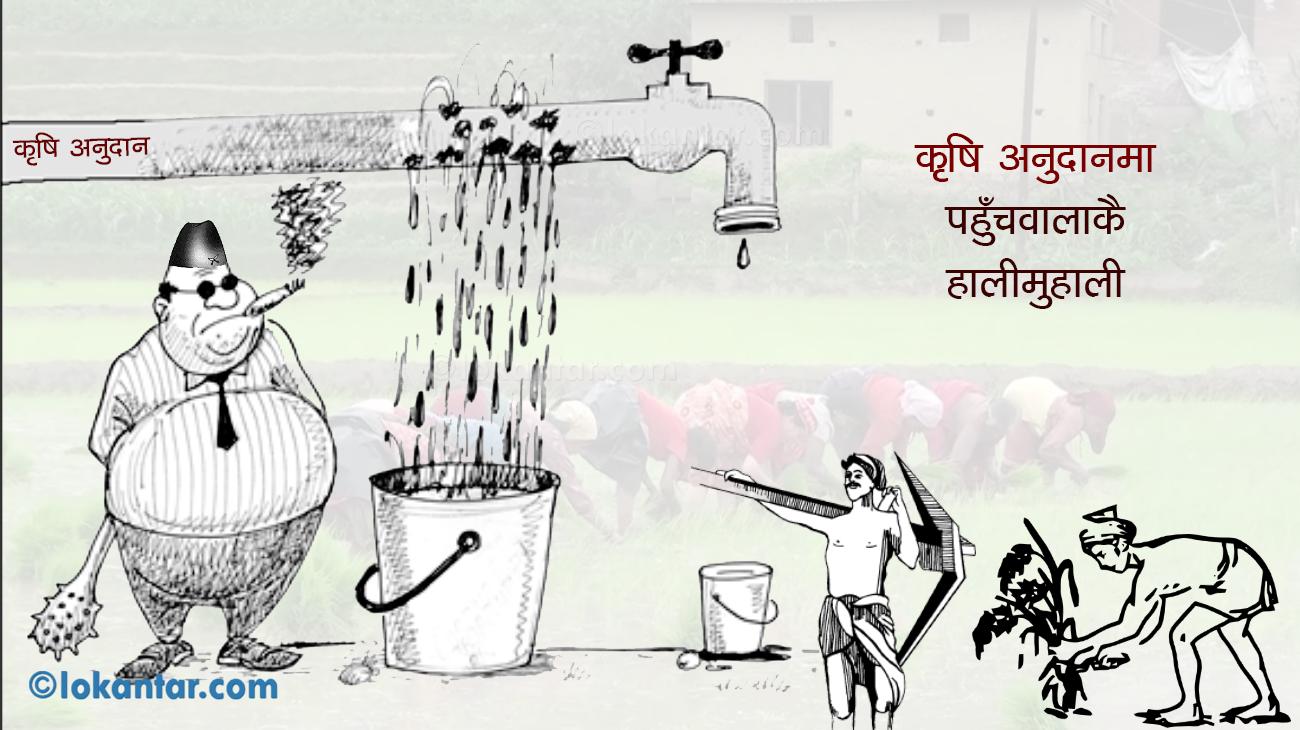 कृषि अनुदानमा टाठाबाठाको रजाइँ, किसानसम्म पुग्दैन सहायता रकम