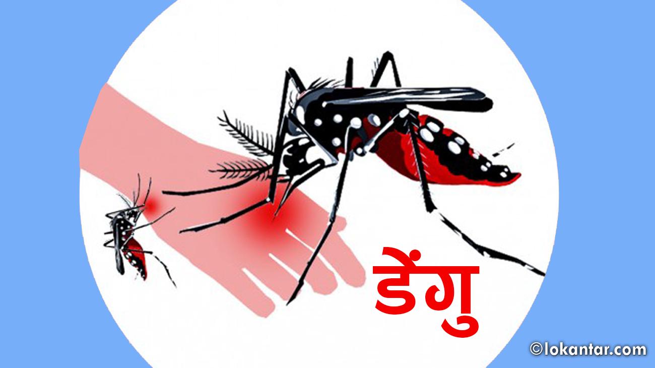 डाक्टरको अनुभव : अस्पताल आउनेमा डेंगुको त्रास धेरै, संक्रमण कम !