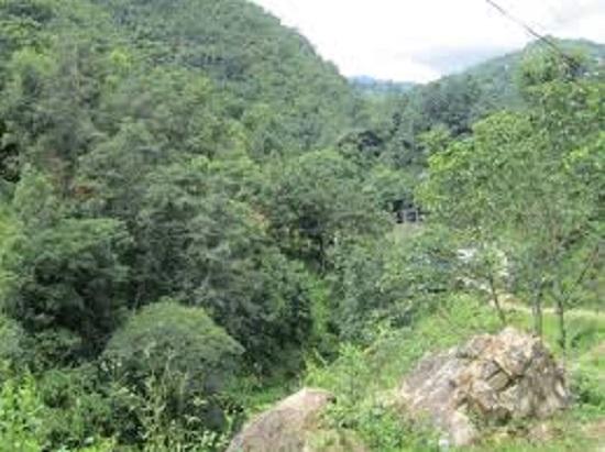 वन क्षेत्र समृद्धिको आधार बन्दै,  एक वर्षमा करिब २ करोड नयाँ बिरुवा उत्पादन