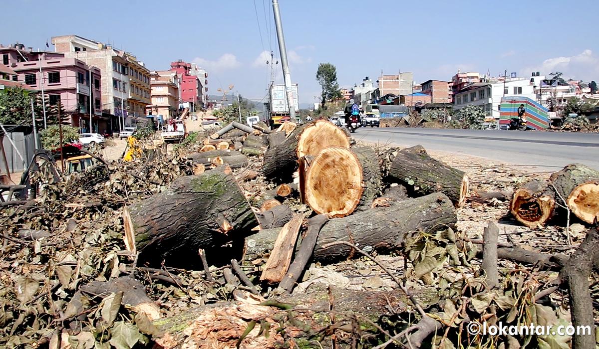 चक्रपथ विस्तारका लागि धमाधम काम, काठमाडौंमा २ हजार ९३ रुख काटिँदै [फोटोफिचर]