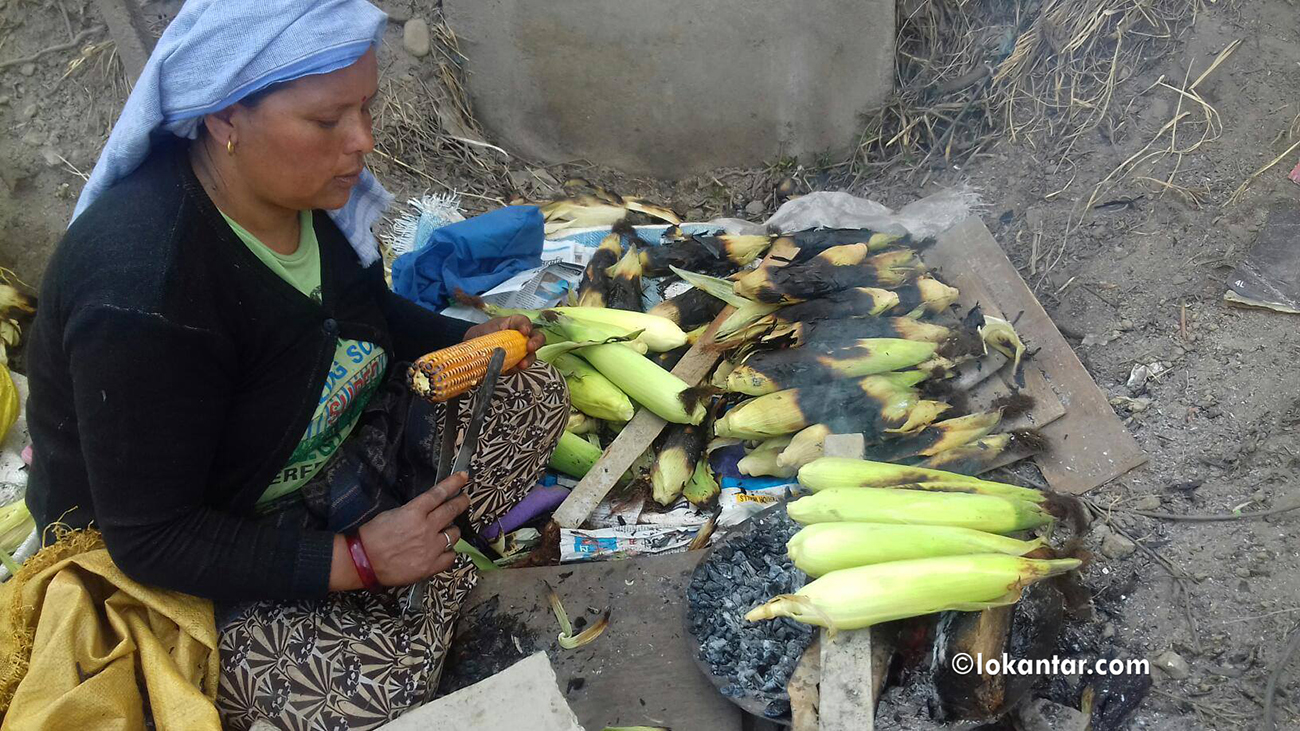 पोलेको मकै व्यापारले धानेको सानुमायाको खुशी