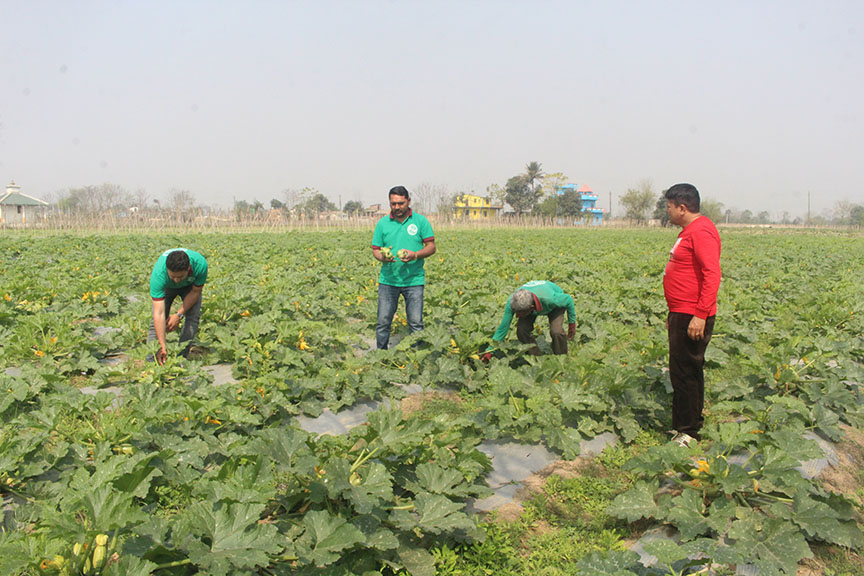 प्रदेश आर्थिक विकासको मेरुदण्ड कृषि क्षेत्र