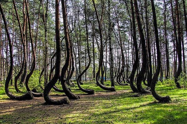 खुम्चिँदै चारकोसे जंगल, दुई जिल्लामा मात्र ११ हजार हेक्टर घट्यो